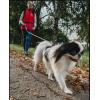 Гульдог: выгул, передержка, няня для собак